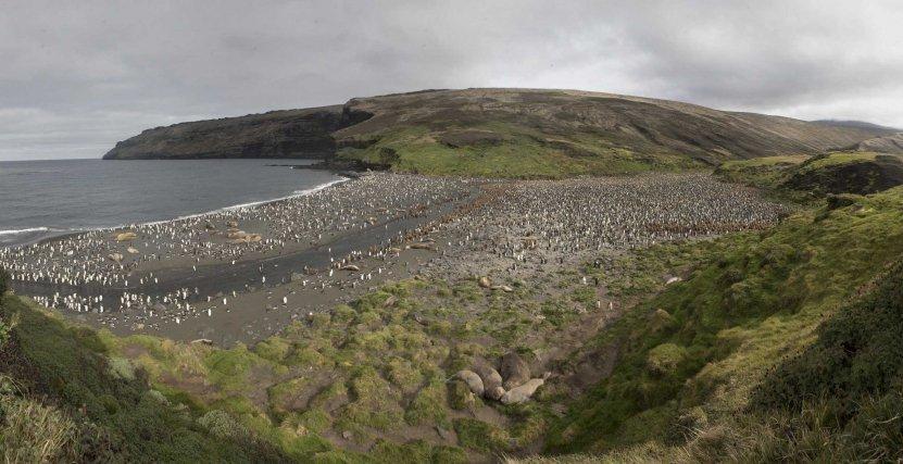 Une vue générale de la Petite Manchotière. Le chemin menant à la base de Crozet se trouve de l'autre côté de la baie.