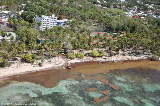 Des sargasses envahissent le lagon de mer de Sainte-Anne (Guadeloupe) déserté par les baigneurs (mai 2018)