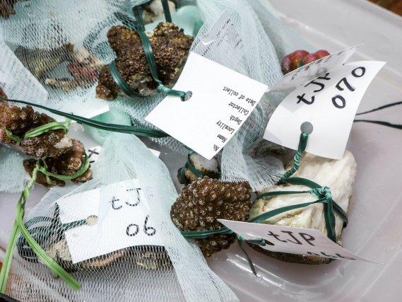 échantillons de coraux