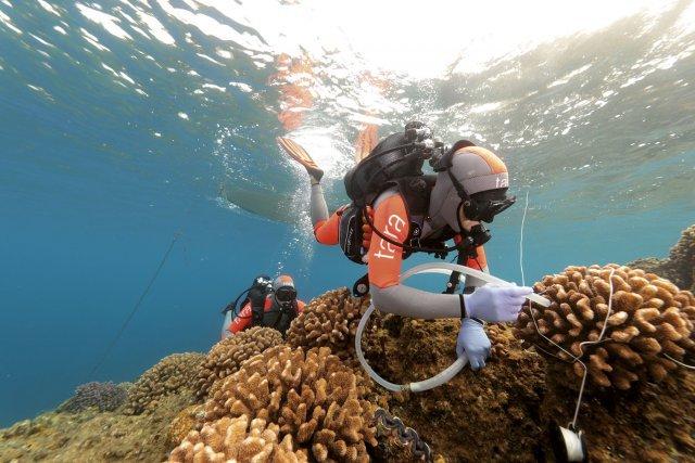 Analyse de l'eau autour des coraux au Japon.