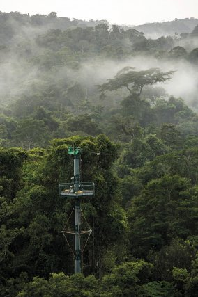 """Brume matinale sur la forêt des Nouragues. L'un des pylônes du COPAS émerge de la canopée. C'est sur l'un d'eux, qu'est mis en place le système de """"mesure Nouraflux"""", installé par le CNRS en octobre 2014."""