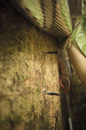Relève les données de circulation de flux de sève sur un arbre, situé sur une parcelle de la station de recherche des Nouragues. Ce projet de recherche cherche à comprendre la réaction des arbres face aux variations de l'humidité et au stress hydrique de la saison sèche.