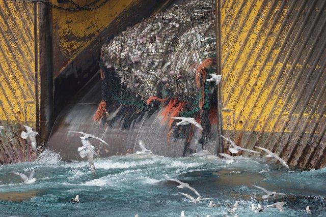 Chalutier de fond dans la mer de Barents au large de la côte est du Svalbard. La plupart des navires de pêche opérant dans la zone utilisent un chalut de fond, tirant d'énormes filets pour ramasser du poisson, une pratique destructrice pour la faune et les fonds marins. Juillet 2016.