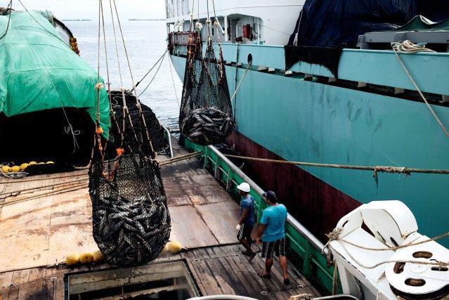 Début2019, la FAO a souligné les conséquences du réchauffement climatique sur les populations de thon du Pacifique. Les projections montrent un fort déplacement du listao et de l'albacore à l'est de l'Océan Pacifique.  Au cours des huit prochaines années, ce phénomène pourrait affecter les revenus de la pêche aux Tuvalu et dans sept autres États de la région.