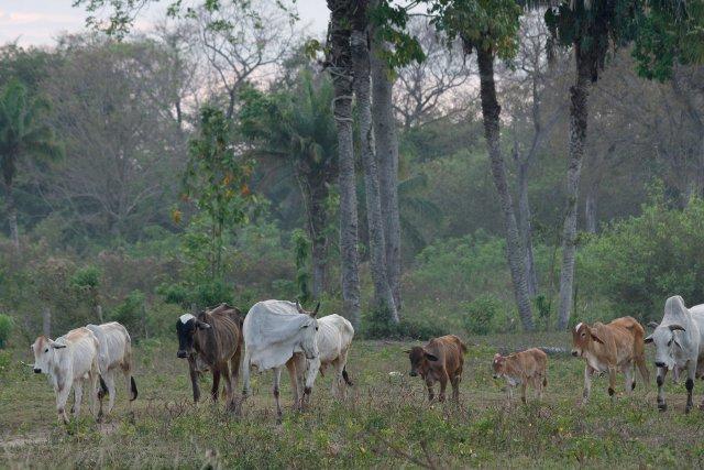 Élevage dans le Pantanal.