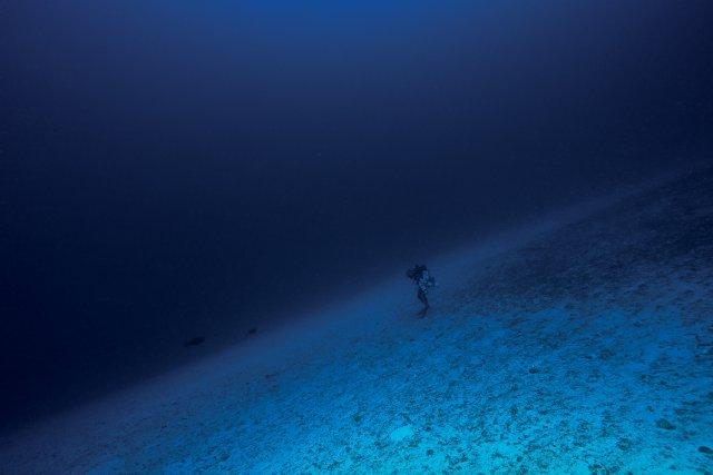 A 100 mètres de profondeur, sur une plage de sable qui se trouve entre le second et le troisième tombant. On croise souvent des requins marteaux et des requins tigres à ces profondeur.