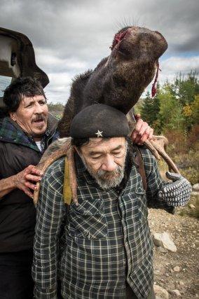 Retour de la chasse, un orignal a été depecé en forêt après avoir été abattu depuis la route. Les deux habitants chargent les différentes parties de l'animal dans le coffre.