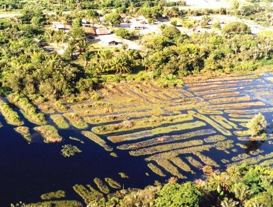 Vue aérienne des vestiges de champs surelevés à Awala Yalimapo