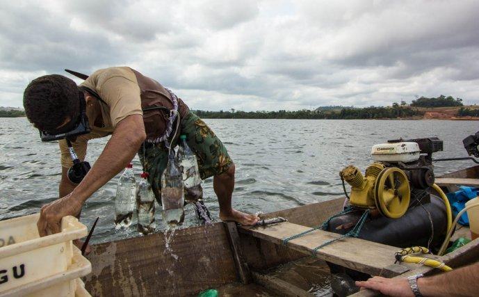Don Elio et son fils pêchent traditionnellement dans le Xingu, et vendent des poissons d'aquarium à Bélem recoltés en plongée sous marine et avec un compresseur artisanal