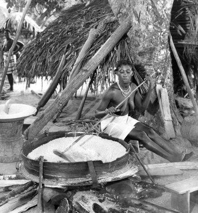 Cuisson du couac sur la platine à manioc. On voit les couleuvres (tubes de vannerie) dans lesquelles sont détoxifiées la pulpe de manioc amer.