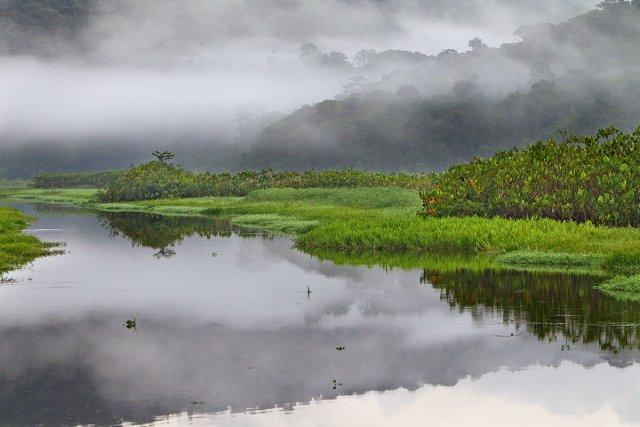 Brumes matinales. Paysages des marais de Kaw. Guyane.