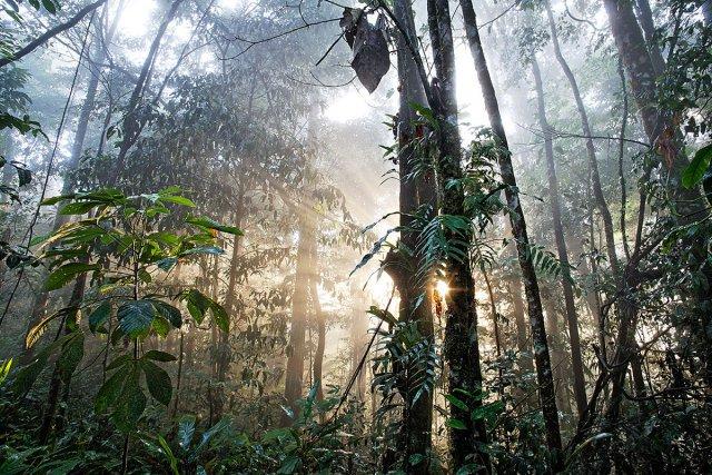 Forêt de la montagne de Kaw. Fin de journée.