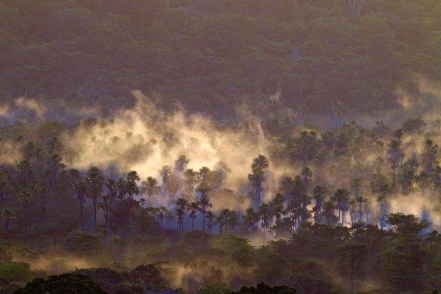 Palmiers bâche au crépuscule, après une averse.