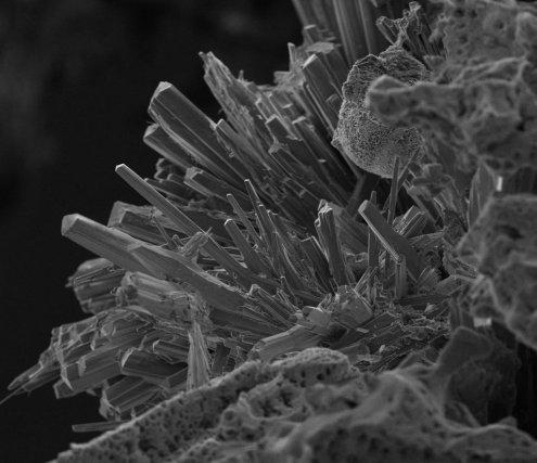 Pile à combustible microbienne. Prototype du L3MA. Formation de cristaux sur une électrode de titane. Grossissement x 1000. ©L3MA