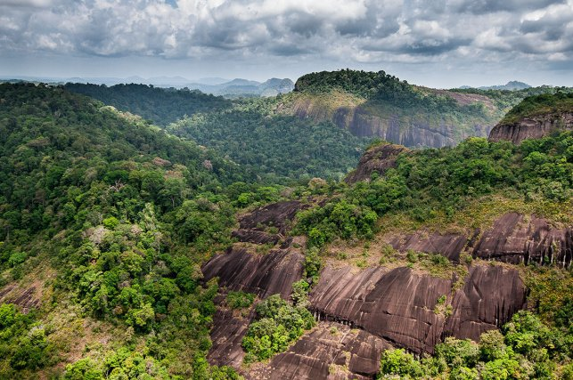 Le Mitaraka (681m). Assis sur la frontière brésilienne, ce massif est constitué de plusieurs inselbergs disposés en arc de cercle autour de l'une des sources des affluents du haut Rio Mapaoni. C'est l'unique site guyanais où fût observé  un petit toucan, Aulacorhynchus whitelianus. Cet oiseau est habituellement inféodé aux reliefs tabulaires du sud-est vénézuélien, du sud du Guyana, et du centre du Suriname. 13 septembre 2008