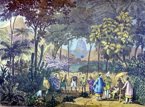 Plantation chinoise de thé dans le Jardin botanique de Rio de Janeiro. J. Moritz Rugendas, vers 1821-1825.