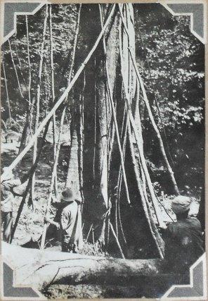 Travaux forestiers à Crique Anguille en 1939 (Photo de l'administrateur du camp J. Souvant).