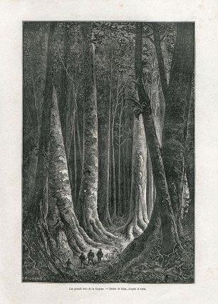 Les grands bois de la Guyane
