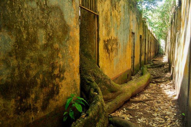 Sur l'île Saint-Joseph, au large de Kourou, la nature a repris ses droits. Ici, des centaines de bagnards ont été emprisonnés dans ces cellules à ciel ouvert.