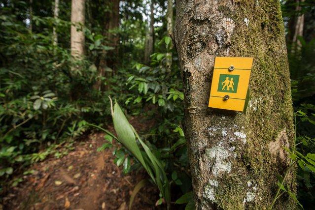 Panneaux signalétiques sur les sentiers de randonnée de Saül, Guyane fr.