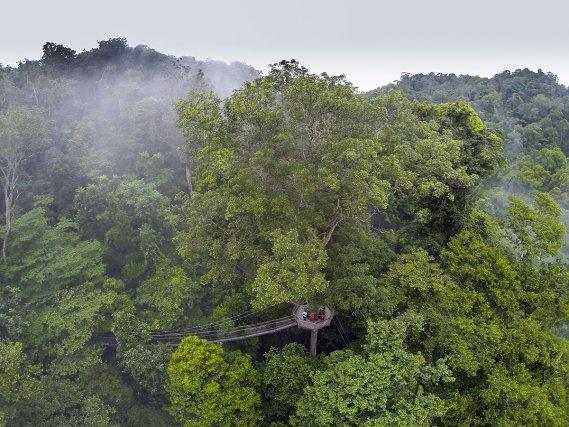 Parcours de Canopée située dans la réserve d'Iwokrama.