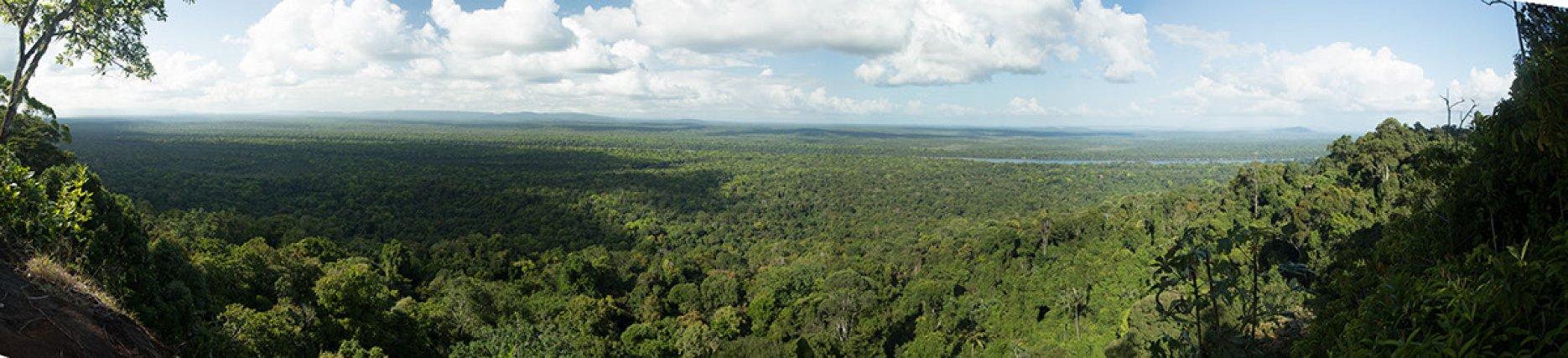 Panorama des montagne Tortues à Iwokrama