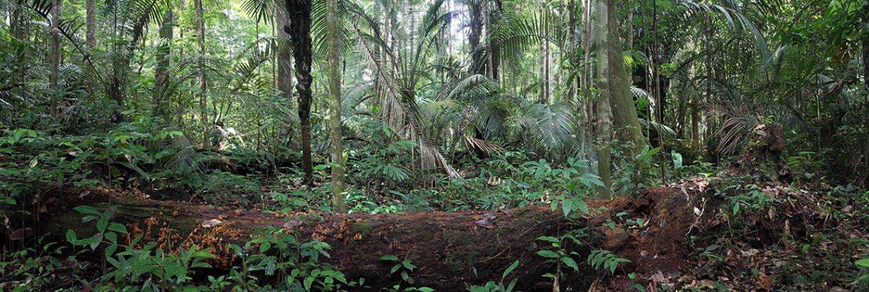 Sous bois de forêt sur pente