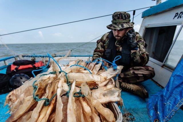 Un officier de La Gracieuse prend ses instructions derrière une caisse contenant 30 kilos de vessies natatoires. Elles sont vendues entre 100 et 200€/ kg à des négociants qui les revendront ensuite jusqu'à 1000€ / kg à Hong-Kong pour le marché asiatique. Ce débouché représente un marché secondaire de plus en plus important pour les pêcheurs illégaux.