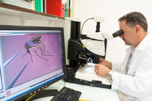 Identification morphologique des moustiques à l'Institut Pasteur
