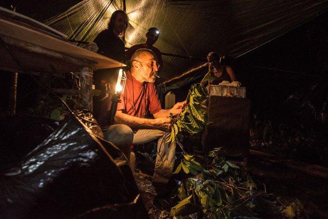 Le soir au campement, le botaniste Daniel Sabatier identifie des échantillons récoltés durant la journée