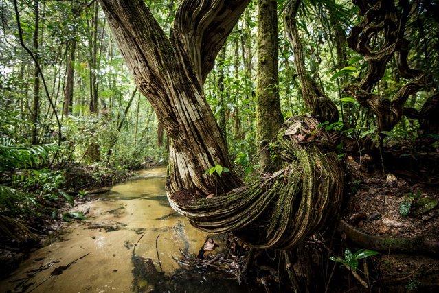 La pénéplaine de la Waki repose sur des sols sablo-limoneux, à l'image de cette petite crique forestière.