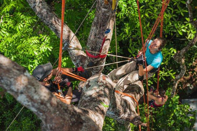 Le regard d'Anna est rivé sur la cime de l'arbre qui l'accueille tant le spectacle est inhabituel. Même s'il nécessite d'être en forme, l'effort physique permettant de se hisser à plus de 20 mètres de hauteur est à la portée de la plupart des gens. Le jeu en vaut la chandelle si l'on veut découvrir la forêt guyanaise sous un angle résolument nouveau.