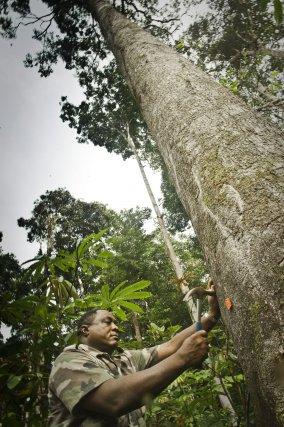 Désignation par Raoul Soutou, agent de l'ONF des arbres qui seront proposés à la vente
