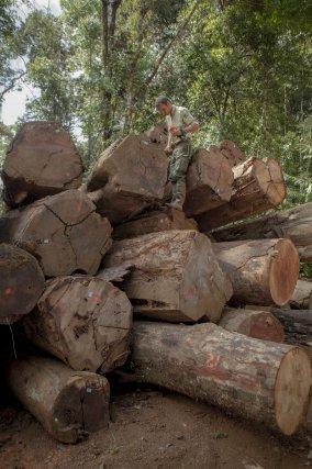 Fabien Escalière, agent de l'ONF réalise le cubage des bois entreposés sur un parc de rupture dans le massif de Régina.