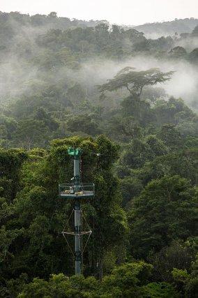 Brume matinale sur la forêt des Nouragues. L'un des pylônes du COPAS émerge de la canopée. C'est sur l'un d'eux, qu'est mis en place le système de