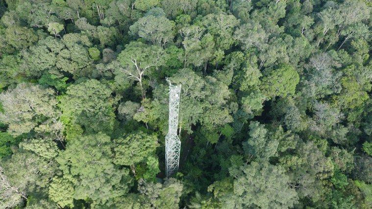 La tour Guyaflux, mise en place sur le site de Paracou par l'INRA, était la première tour à flux de Guyane, elle fonctionne depuis 2003