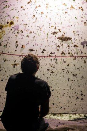 Des entomologistes tendent un piège lumineux pour capturer insectes et papillons sur la zone de largage du camp (à 600 m)