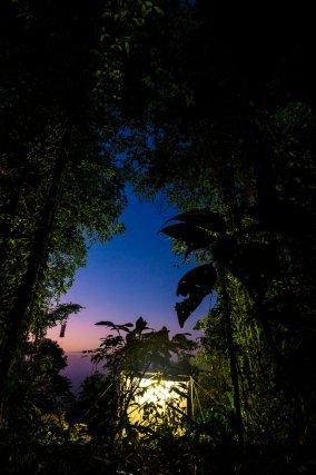 Végétation aux abords du piège lumineux installé par les entomologistes en forêt de nuages sommitale (830 m)