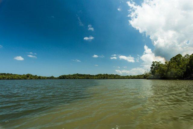 """Les amérindiens ont baptisé cette portion de la crique  de la Coswine, Palanapo (prononcer palanabo): la """"vieille mer"""""""