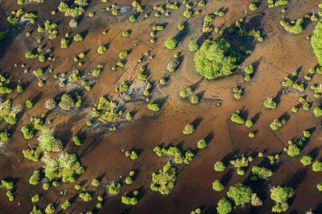 A la saison sèche, l'eau de la savane Sarcelle s'évapore. La concentration en sel du marais peut alors être supérieure à celle de l'eau de mer.