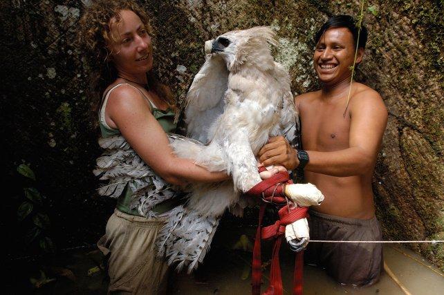 En équateur, la biologiste Ruth Muñiz-Lopez s'apprête à équiper d'une balise Argos une jeune Harpie féroce pour suivre ses déplacements