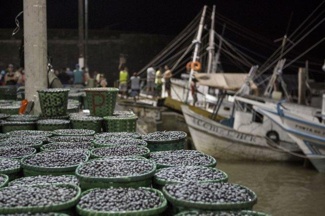 Au cœur de la nuit, le marché du Ver-o-Peso à Belém voit débarquer les tapouilles des villages alentour, chargées des paniers d'açaí. Novembre 2017.
