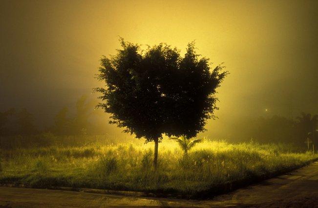Árvore Amarela, chrome 35mm, vers 2003.