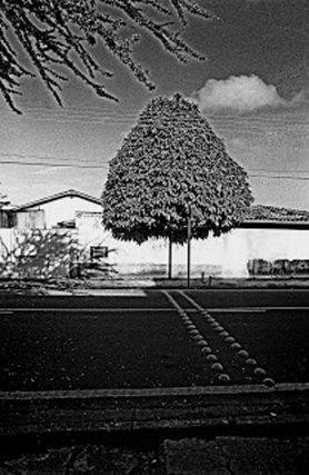 série Arborescência, Belém-Pará, négatif 24x36mm, 2000.