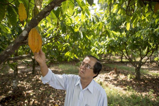 Michinori Konagano, agriculteur, avec une cosse de cacao dans une parcelle en SAFTA, le système agroforestier de Tomé Açu.