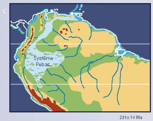 De -23 à -10 millions d'années, l'immense mer intérieure du système Pebas couvre une partie de l'Amazonie.