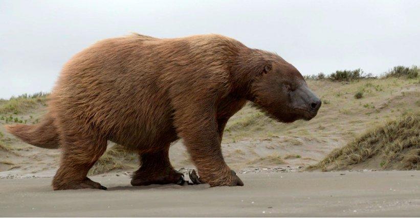 Le Megatherium est un ancêtre des paresseux actuels. Terrestre, il fut le plus grand de tous les xénarthres, il pouvait atteindre 4 mètres de hauteur lorsqu'il se dressait sur ses pattes arrière et près de 4 tonnes. Il a disparu il y a environ 10000 ans.