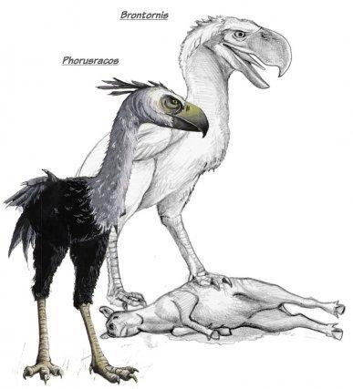 Phorusracos et Brontornis