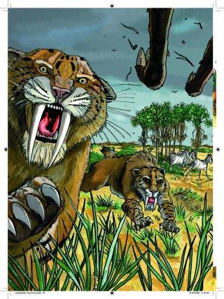 Le Smilodon (qui signifie dent de sabre, en haut) était un félin qui mesurait environ 2 mètres de long, et pesait plus de 200kg. Il n'était probablement pas un sprinter, mais chassait à l'affût et en meute. Ils ont disparu il y a 8 000 ans.
