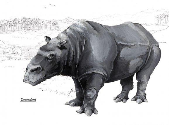 Le Toxodon, un herbivore du groupe des Notongulés a survécu jusqu'à la fin de la dernière période glaciaire.